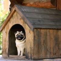 Construire une niche de chien