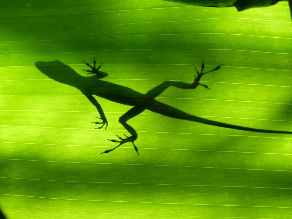 La richesse de la faune et de la flore des Antilles françaises