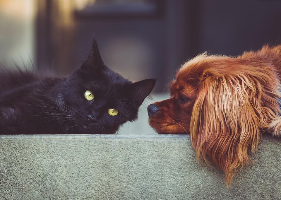 3 conseils avant de choisir votre assurance animalière
